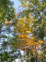 Autumn at Cherokee Marsh