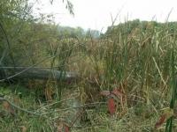 Cherokee Marsh