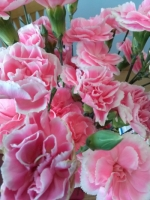 Nail salon carnations